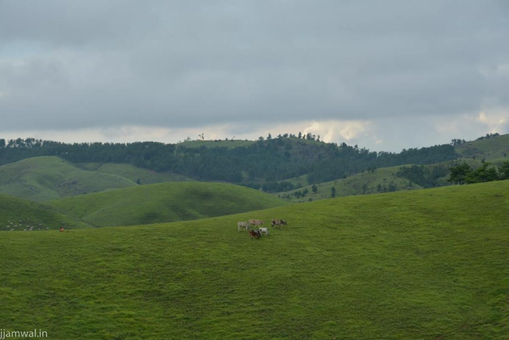 Rolling green hills on way to Shillong from Tura